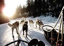 Abenteuer mit Schlittenhunden