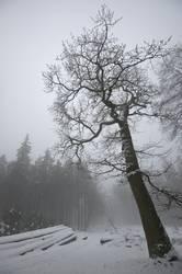 Stille im winterlichen Wald