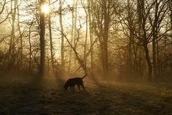 Hund im Morgennebel