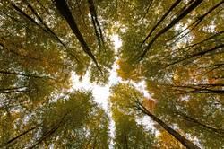 Bäume und Zwischenräume