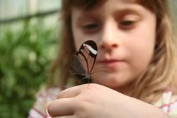 Nina und der Schmetterling
