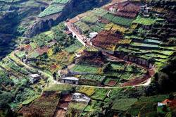 vineyard agriculture in the Madeira Island