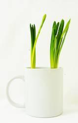 Frühling in der Kaffeetasse