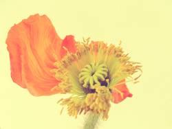 Flower Power VIII