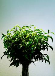 photosynthese 02