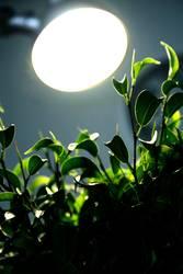 photosynthese 03