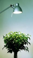 photosynthese