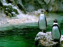 pinguin/3