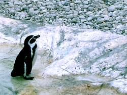 pinguin/2