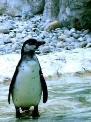 pinguin/1