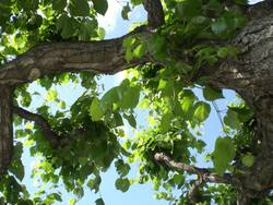 Chillen unterm Baum