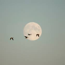 Moonlight Flying - First and last and always