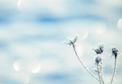 Noch mehr Winter