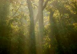 Frühmorgenwald