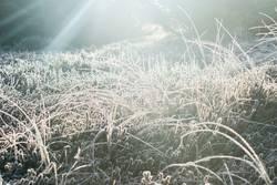 Kalt, kalt, kalt sind alle meine Gräser