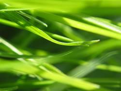 Durcheinander im Gras