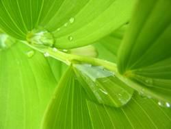 Wasser im Grünen 5