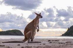 Wanna be a Wallaby
