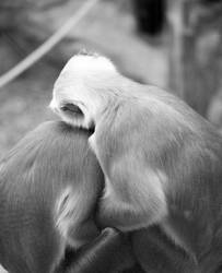 Melancholie im Tierreich