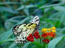 Schmetterdingens