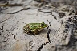 frosch bleibt frosch