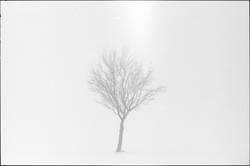 arbre.