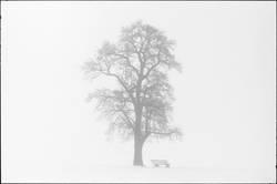 arbre..