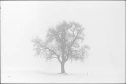 arbre....