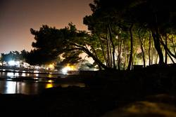 Nacht Bäume Hafen