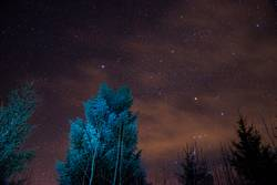 Sternenbäume