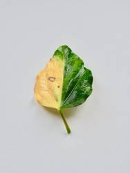 Herbst Blatt gelb grün