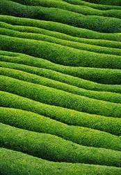 Grüne Welle ( 100. )