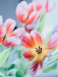 Tulpen im Herbst
