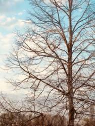 Herbst Winter Baum Doppelbelichtung