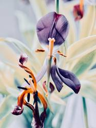 Vergänglichkeit Blüte Blume verblüht