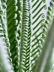 Palmenwedel Nachwuchs