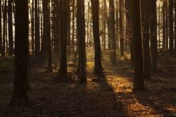 Waldlichtung am frühen Morgen