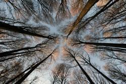 Gen Himmel aufragende Bäume im Laubwald