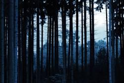 Der blaue Wald