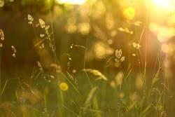 Gräser im sommerlichen Garten