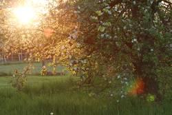 Alter Obstgarten