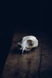Der Tod als Ästhet