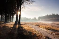 Weg im goldenen Herbst sonnigen Wald