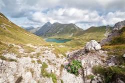 wildflowers on rocks by alpine lake, Germany