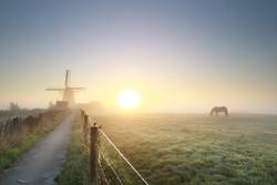 misty gold sunrise with grazing horse and windmil