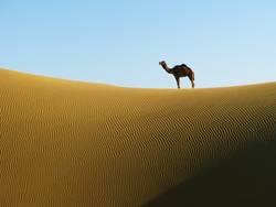 Wüstenschönheit
