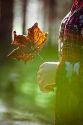 die Herbstzeitlosen