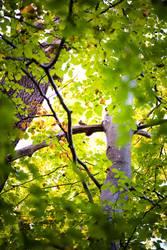 hoch oben im Baum