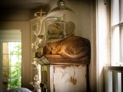 Snoozing on the Shelf