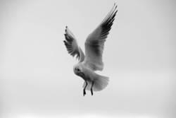 Pls don't feet seagulls !